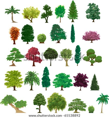 Different Kinds Of Trees And Their Names Security Sistems