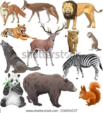 set of different wild animals. Vector illustration - stock vector