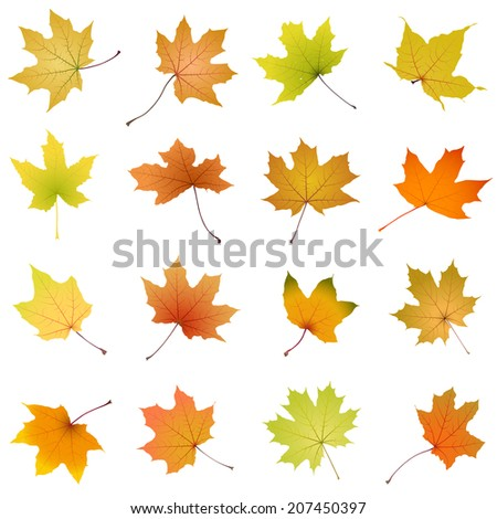 Set of falling autumn maple leaves on white background, vector illustration. - stock vector