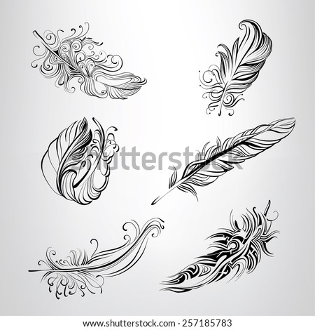Set of feathers in an ornament - stock vector