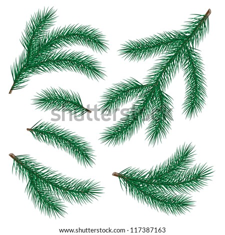 set of fir branch on white background. vector illustration - stock vector