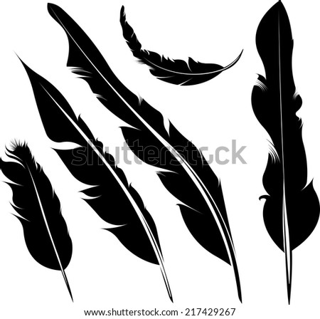 Set of five vector silhouette of feathers - stock vector