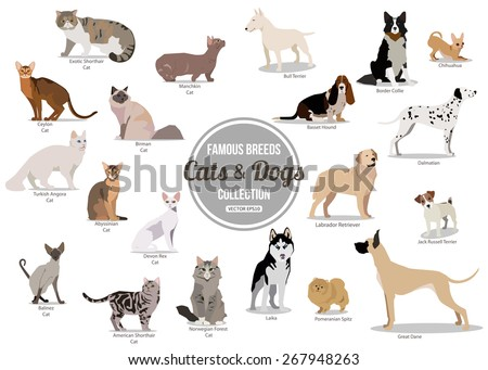 Set of flat sitting or walking cute cartoon dogs and dogs. Popular breeds. Flat style design isolated icons. Vector illustration. - stock vector