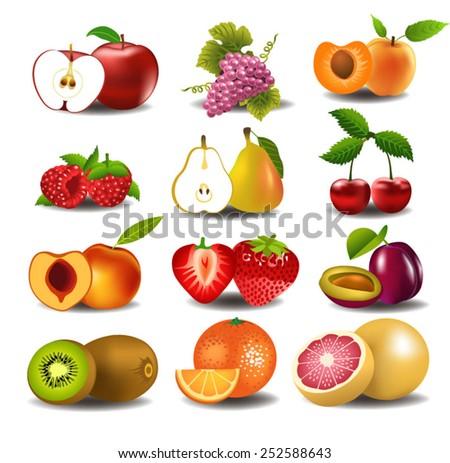set of fresh fruits - stock vector
