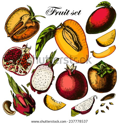 Set of fruits. Freehand drawing. Vector illustration - stock vector