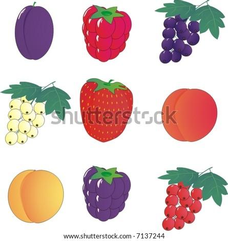 set of garden berries icons (vector illustration) - stock vector