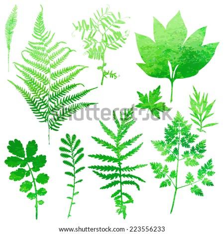 Set of garden watercolor leaves. Vector illustration. - stock vector