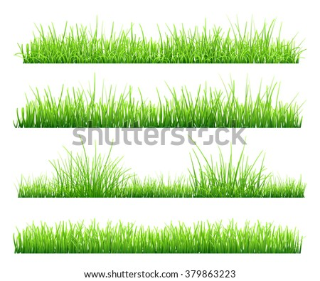 Set of green grass, isolated on white background. Vector illustration - stock vector