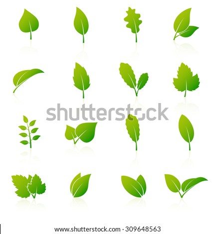 Set of green leaf icons on white background. Vector illustration - stock vector