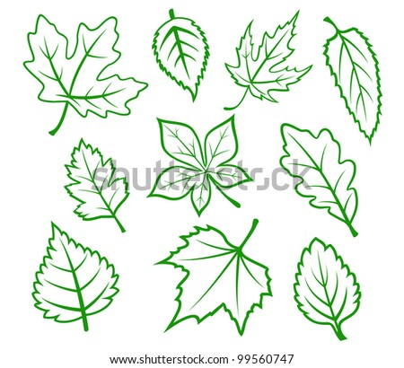 Set of green leaves isolated on white background, such  a logo. Jpeg version also available in gallery - stock vector