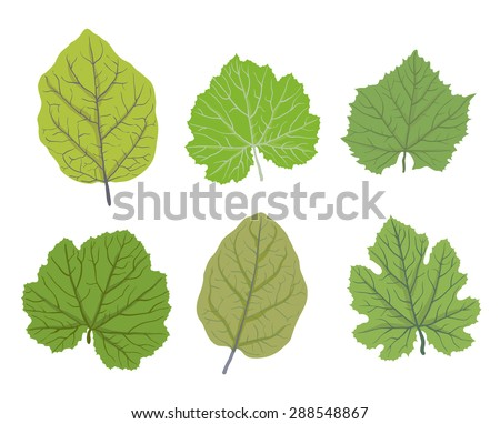 Set of green leaves of trees, isolated on white, vector illustration - stock vector