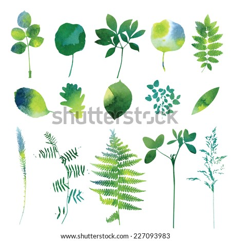 Set of green watercolor leaves and grass. - stock vector