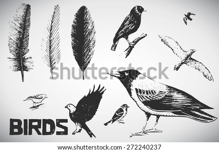 set of hand drawn feather and different birds - stock vector