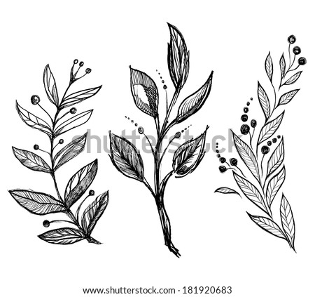 set of hand drawn ink sketch spring branch plants with leaves - vector illustration - stock vector