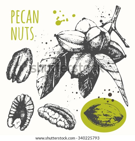 set of hand drawn pecans black and white sketch food