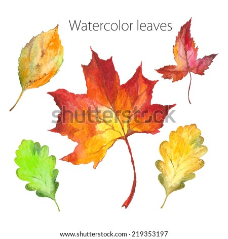 Set of hand-painted in watercolor and brush on paper - beautiful red and yellow autumn leaves - vector illustration - stock vector