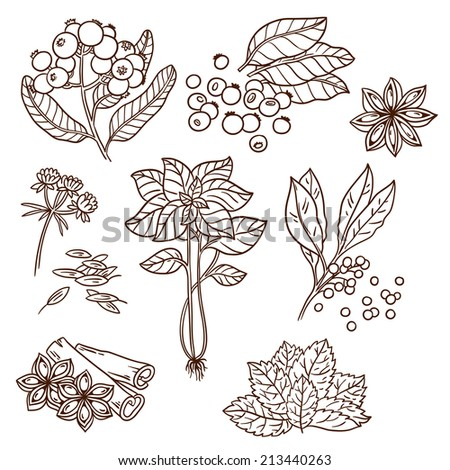 Set of Herbs and Spices. Natural spices. Compilation of vector sketches. Kitchen herbs and spice. Vintage style. Hand drawn. - stock vector