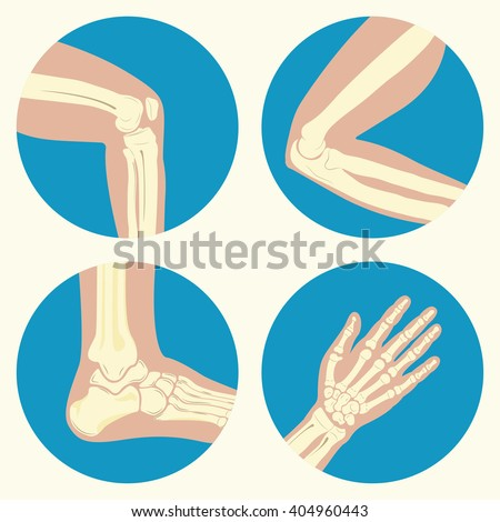 Set of human joints, knee, elbow and ankle joints and wrist, emblem or sign of medical diagnostic center or clinic, flat design, vector - stock vector