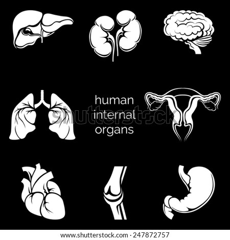 Set of internal human organs white silhouettes in the black background. Vector illustration - stock vector