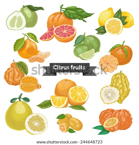 Set of isolated citrus fruits. Vector illustration for your design - stock vector