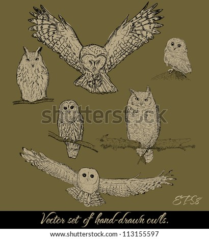 Set of isolated owls. Vector illustration EPS8 - stock vector