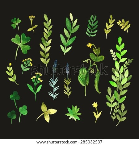 Set of isolated watercolor flowers (trace) - stock vector