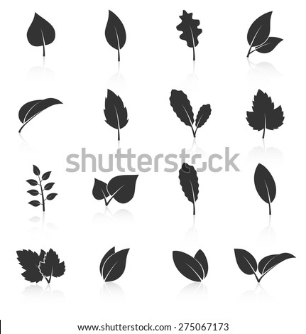 Set of leaf icons on white background. Vector illustration - stock vector