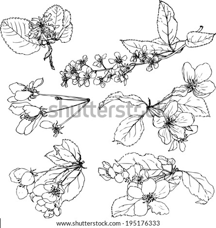set of line drawing flowers of trees,apple blossoms, cherry blossoms, hand drawn design element, vector illustration - stock vector