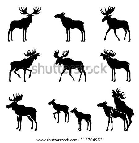Set of Moose Silhouettes. Vector Images  - stock vector