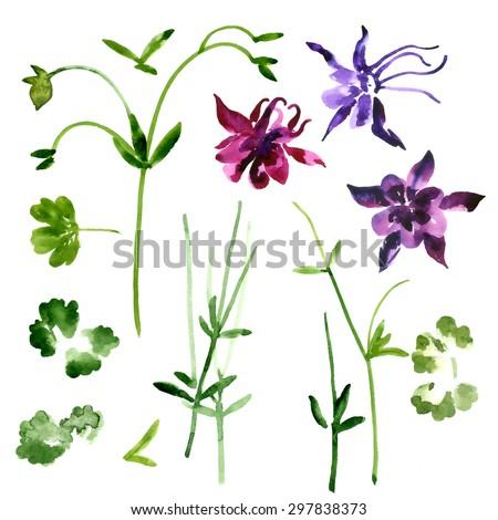 Set of orange watercolor aquilegia flowers and leaves - stock vector