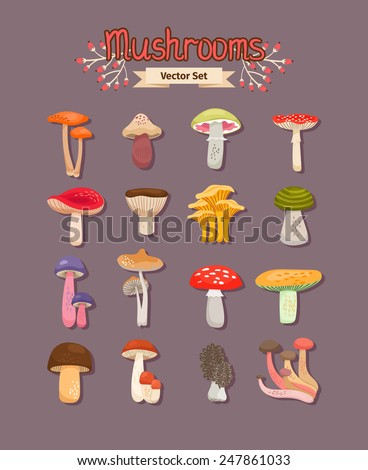 Set of painted different mushrooms edible and inedible. Vector illustration - stock vector