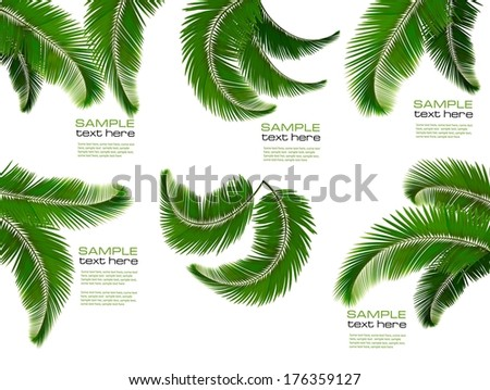 Set of palm leaves on white background. Vector illustration.  - stock vector