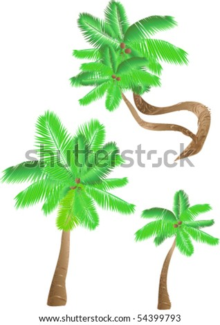 Set of palm trees - stock vector