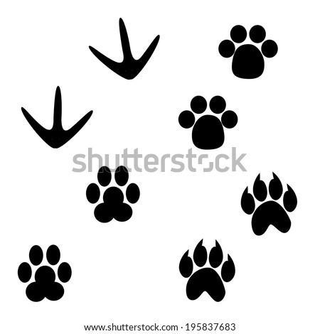 Set of paw print Vector - stock vector