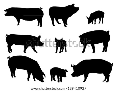 Set of Pig Silhouettes. Vector Image - stock vector