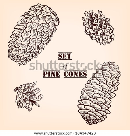 set of pine cones , hand drawn vector illustration - stock vector