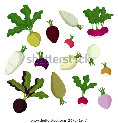 Set of radish, beet and turnip vector illustration - stock vector