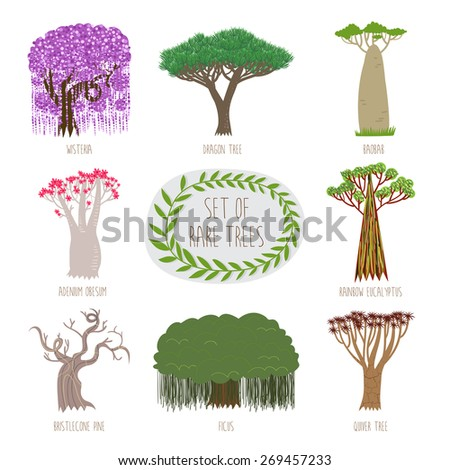 Set of rare trees in vector (Wisteria, Dragon tree, Baobab, Adenium Obesum, Ranbow Eucalyptus, Bristlecone pine, Ficus, Quiver tree). - stock vector