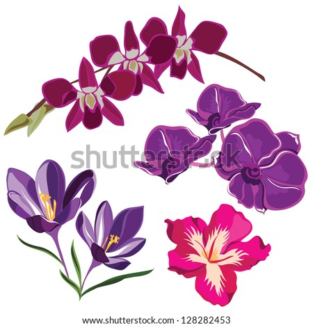 Set of realistic flowers, isolated on white background.Vector illustration. - stock vector