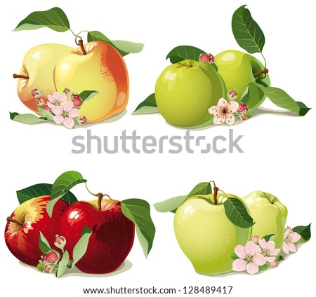 set of ripe apples with leaves and flowers - stock vector