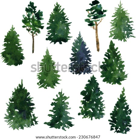 set of set of conifer trees drawing by watercolor, vector illustration - stock vector