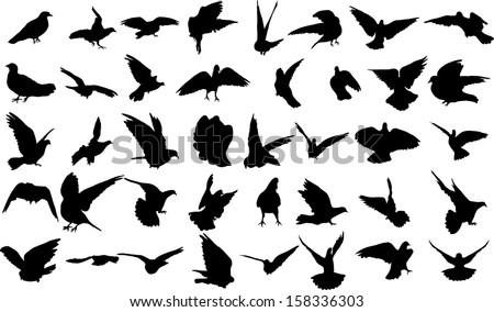 Set of 40 silhouettes of birds - stock vector