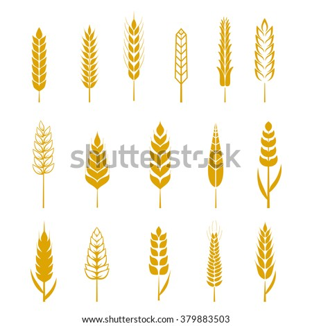 Set of simple wheat ears icons and wheat design elements for beer, organic wheat local farm fresh food, bakery themed wheat design, wheat grain, wheat elements, wheat simple. Wheat vector eps 10 - stock vector