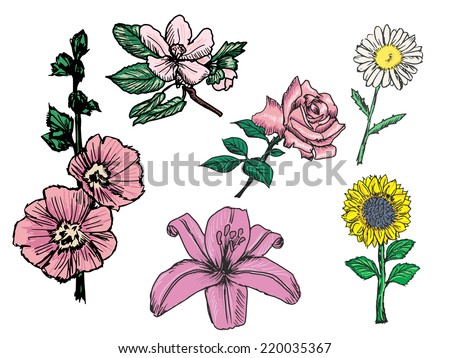 set of sketch, doodle illustrations of flowers - stock vector