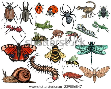 set of sketch, editable illustrations of insects - stock vector