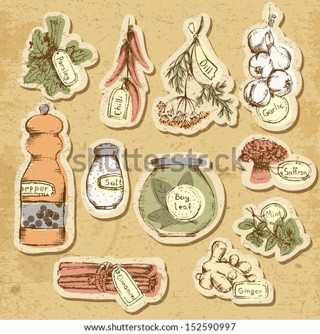 Set of spices and herbs. Vector Illustration. - stock vector