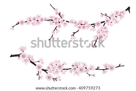 Set of spring blooming tree branches, tree branch with pink flowers. Sakura or cherry. - stock vector