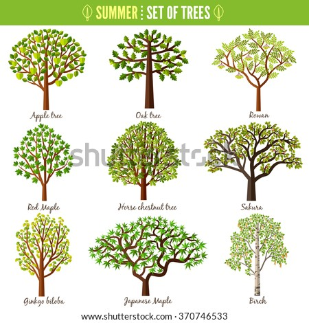 Set of summer trees on white background. Apple tree, Oak tree, Rowan, Red maple, Horse chestnut tree, Sakura, Ginkgo biloba, Japanese maple, Birch. Vector illustration - stock vector