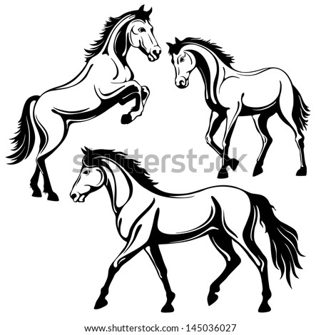 Horse Pictures Black And White Drawing Black White Picture Isolated