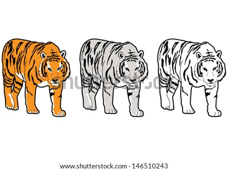 Set of Tigers, Vector Picture Isolated on White Background - stock vector